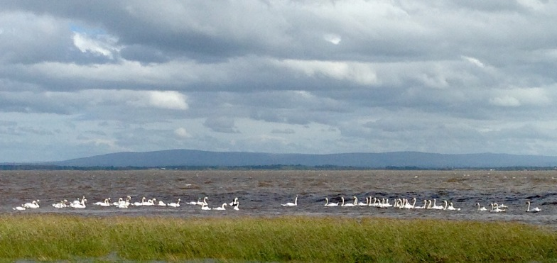 The view back to the English side of the Solway Firth.