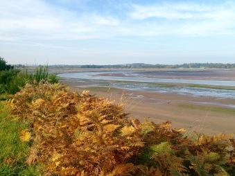Tidal estuary near Dunbar.
