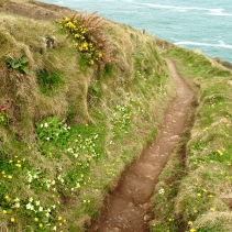 The clifftop path.