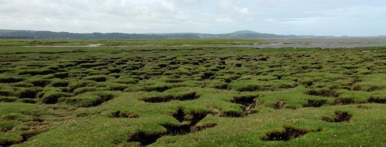 Llanrhidian Marsh.