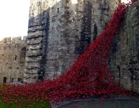 Ceramic poppies commemorating the outbreak of WW1, Caernarfon Castle.