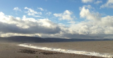 Cormorants and seagulls, Abergele.