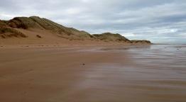 Sand dunes, adjacent to Trump International Golf Course.