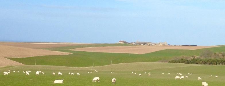 Farmland near Pennan.