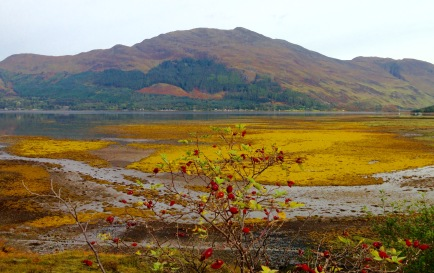 Even the seaweed turns colour in the autumn; Loch Duich.