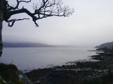 Persistent rain, near Glenborrodale, Ardnamurchan.