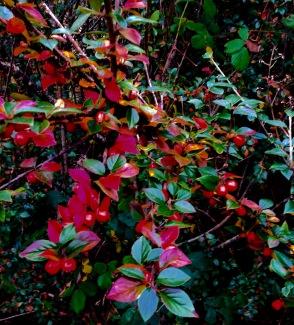 Late autumn leaves.