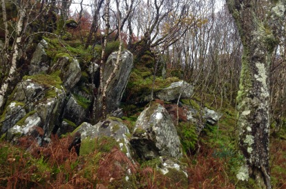 The Ardnamurchan peninsula: last remnants of ancient woodlands which once covered the whole Western seaboard of Scotland.
