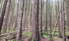 In the Argyll Forest near Corran Lochan.